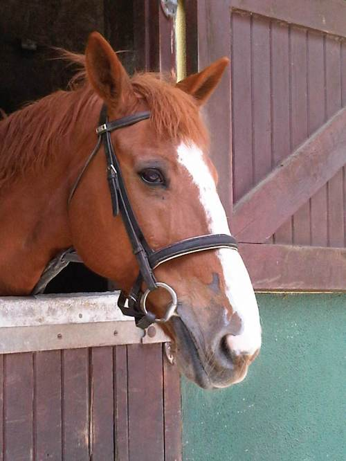 ashford castle horseback riding
